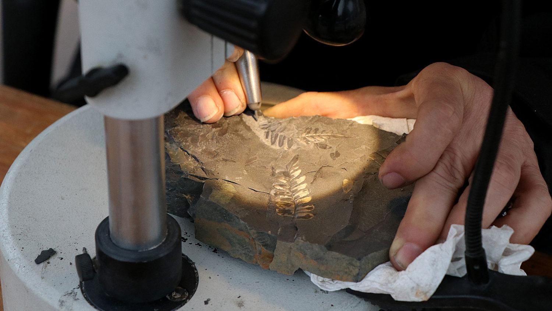 Präparation Fossilien Foto: Museum am Schölerberg