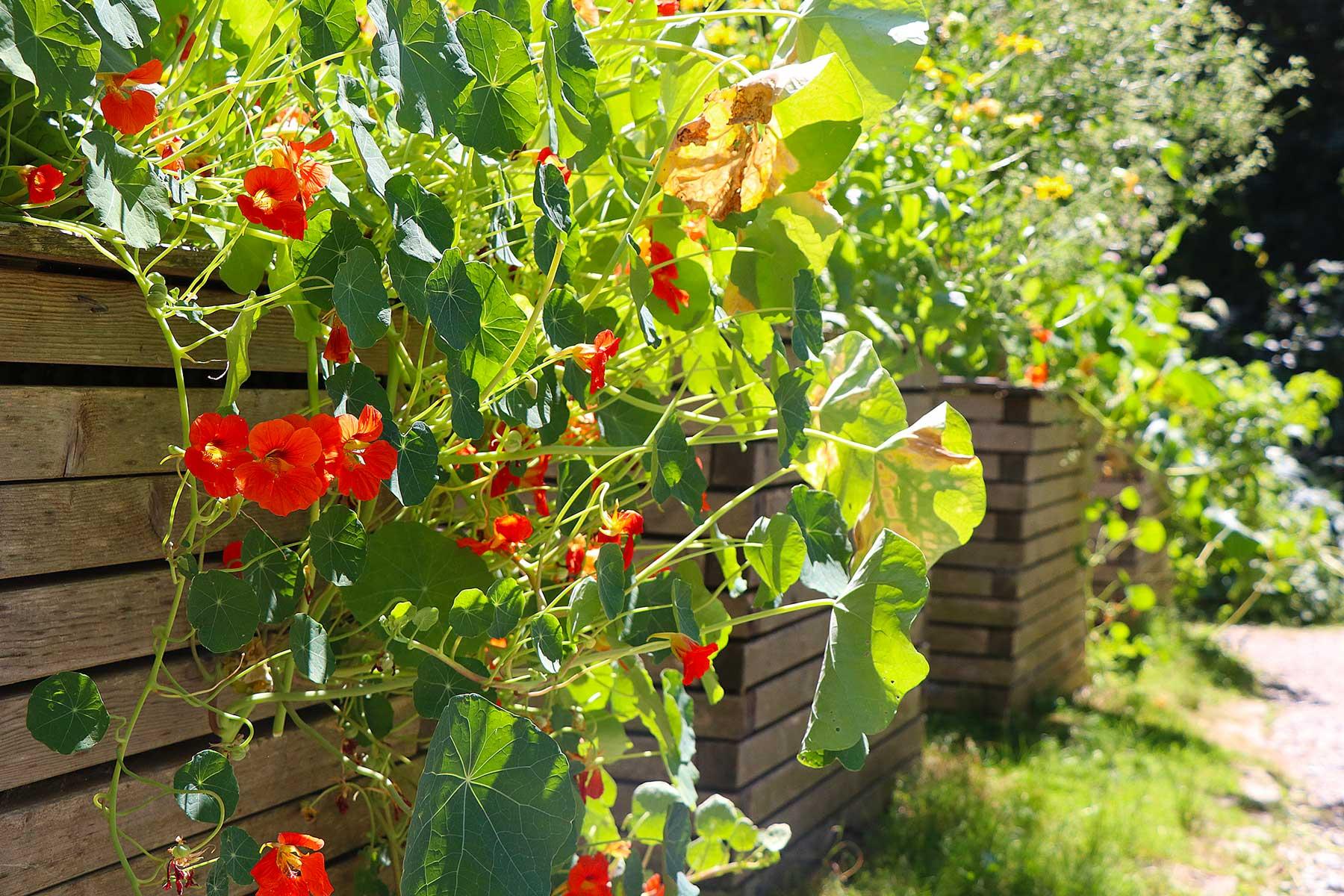 Gartenführung: Grüne Ecken, bunte Beete